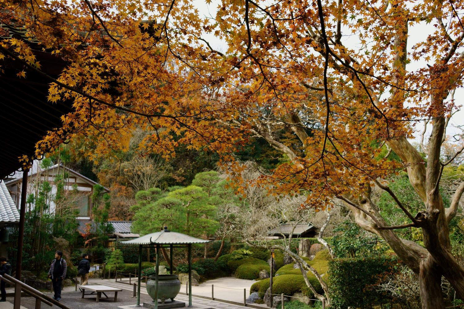 Autumn leaves in Meigetsuin temple - Ambassadors Japan