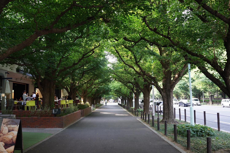 Japanese Sakura Tree | delightfulplaces |Beautiful Japanese Trees