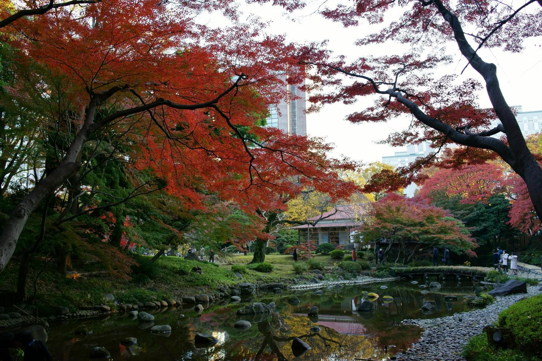 Autumn leaves in Koishikawa Korakuen garden - Ambassadors Japan