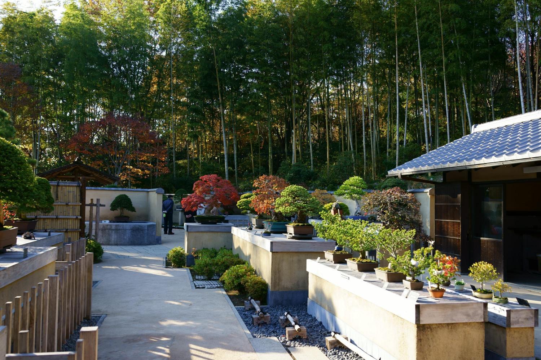 Bonsai Garden In Showa Kinen Park Showa Memorial Park