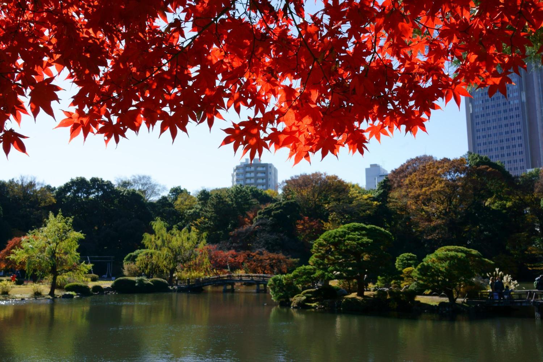Autumn Leaves In Shinjuku Gyoen Ambassadors Japan